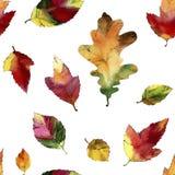Foglie di autunno dell'acquerello Reticolo senza giunte Fotografie Stock