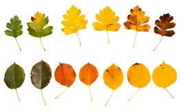 Foglie di autunno di alta risoluzione del ciliegio e del pero della cornalina Immagine Stock Libera da Diritti