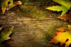 Foglie di autunno di arte su vecchio fondo di legno Fotografie Stock