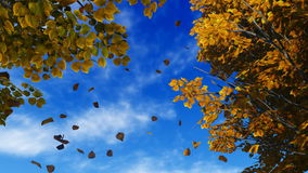 Foglie di autunno di caduta contro cielo blu stock footage