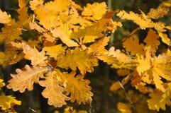 Foglie di autunno di Coloruful fotografia stock