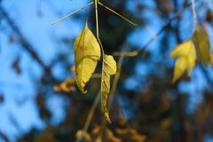 Foglie di autunno dopo pioggia fotografie stock libere da diritti