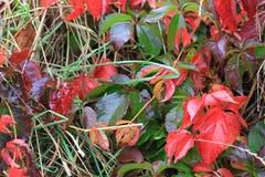 Foglie di autunno dopo pioggia fotografia stock
