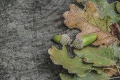 Foglie di autunno e ghiande secche su fondo di legno Fotografia Stock Libera da Diritti