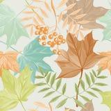 Foglie di autunno e modello della sorba Fotografia Stock