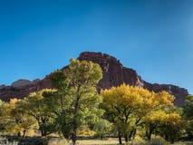 Foglie di autunno Fruita nel parco nazionale della scogliera del Campidoglio, Utah Immagine Stock