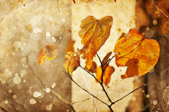 Foglie di autunno, fuoco basso, macrofotografia Fotografia Stock