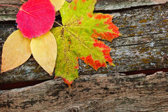 Foglie di autunno gialle Fotografia Stock Libera da Diritti