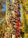 Foglie di autunno gialle e rosse fotografie stock