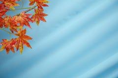 Foglie di autunno gialle e rosse artificiali nei precedenti Fuoco selettivo dell'acero rosso di plastica con fondo bianco fotografia stock libera da diritti