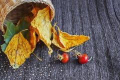 Foglie di autunno gialle e verdi, anche arancio rosse, cadute da un canestro leggero leggero, su un fondo grigio tricottato strut Fotografia Stock
