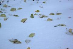 Foglie di autunno gialle e verdi sulla neve immagini stock libere da diritti