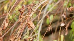 Foglie di autunno gialle nel parco Foglie di autunno gialle nel cespuglio video d archivio