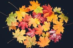 Foglie di autunno gialle sui precedenti scuri fotografia stock libera da diritti