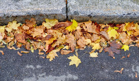Foglie di autunno gialle sulla strada Fotografie Stock Libere da Diritti