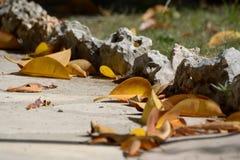 Foglie di autunno gialle sulla terra Immagini Stock
