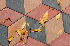 Foglie di autunno gialle sulle mattonelle della strada immagini stock libere da diritti
