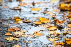 Foglie di autunno gialle in una pozza immagini stock