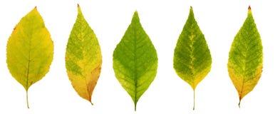Foglie di autunno, giallo, marrone, rosso e verde Fotografia Stock Libera da Diritti
