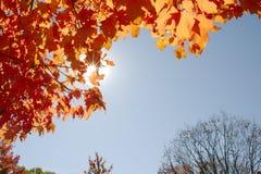 Foglie di autunno il giorno soleggiato Immagine Stock Libera da Diritti