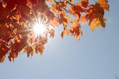 Foglie di autunno il giorno soleggiato Fotografie Stock