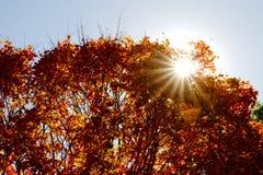 Foglie di autunno il giorno soleggiato Immagini Stock Libere da Diritti
