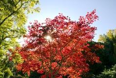 Foglie di autunno il giorno soleggiato Fotografia Stock Libera da Diritti