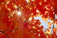 Foglie di autunno il giorno soleggiato Fotografie Stock Libere da Diritti