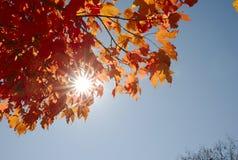 Foglie di autunno il giorno soleggiato Fotografia Stock