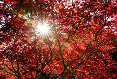 Foglie di autunno il giorno soleggiato Immagini Stock