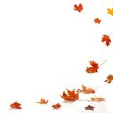 Foglie di autunno isolate Fotografia Stock