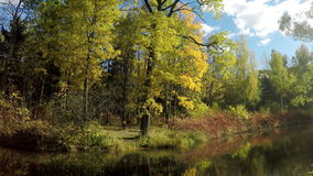 Foglie di autunno luminose in parco archivi video