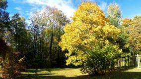 Foglie di autunno luminose in parco video d archivio