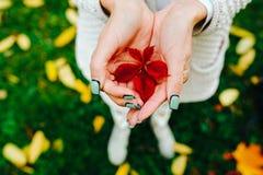 Foglie di autunno in mani della ragazza Immagine Stock