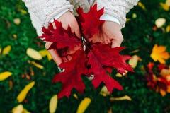 Foglie di autunno in mani della ragazza Fotografie Stock