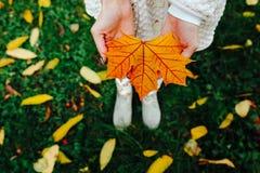 Foglie di autunno in mani della ragazza Fotografia Stock Libera da Diritti