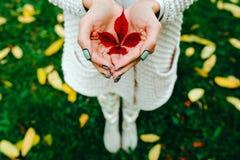 Foglie di autunno in mani della ragazza Fotografia Stock