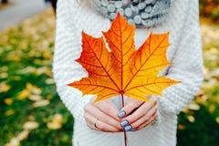Foglie di autunno in mani della ragazza Immagini Stock