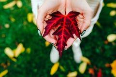 Foglie di autunno in mani della ragazza Immagini Stock Libere da Diritti