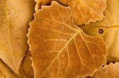 Foglie di autunno marroni dorate Immagine Stock Libera da Diritti