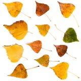 Foglie di autunno messe isolate su fondo bianco Fotografia Stock
