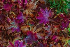 Foglie di autunno morte che si decompongono sulla terra Immagini Stock Libere da Diritti