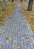 Foglie di autunno nel parco Fotografia Stock