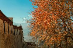 Foglie di autunno nel Tibet Fotografie Stock Libere da Diritti