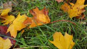 Foglie di autunno nell'erba archivi video