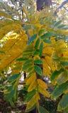 Foglie di autunno in parco gorkiy Immagini Stock Libere da Diritti