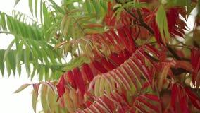 Foglie di autunno rosse in acquazzone della foresta e foglie bagnate Rair nel tempo di autunno Movimento lento delle gocce di pio archivi video