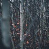 Foglie di autunno scorso immagine stock