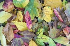 Foglie di autunno secche come fondo Immagini Stock Libere da Diritti