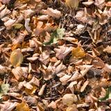 Foglie di autunno senza cuciture sulla struttura al suolo fondo, stagionale fotografie stock libere da diritti